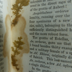 Things you find in books, a type of moss?